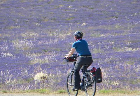 Lavendel Reisebericht Provence