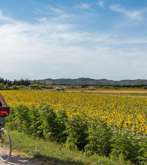 Rückenwind bike tours