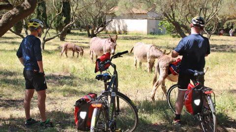 Radreisen Südfrankreich