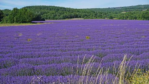 Reisebericht Lavendel Radreise