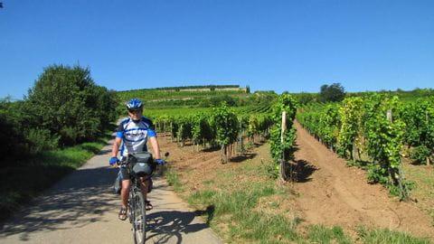 Bike Tour Pfalz
